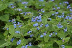 Garden Plants Flowers Starting With Letter B Gardenseekercom