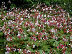 Garden Plants Flowers Starting With Letter G Gardenseekercom