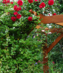 A sturdy pergola is necessary for growing a wide range of plants such as climbing roses etc. Stability is very important, for when in leaf, the plants will act as a 'sail' in strong winds