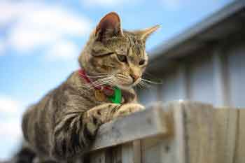 Cat awaiting on top of fence