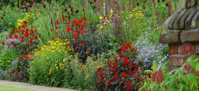 A well stocked herbaceous perennial border